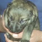Lieselotta 10 Tage alt